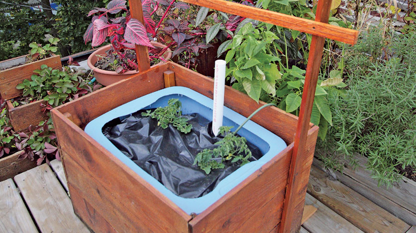 With A Fill Tube For Topping Up The Water Supply, This Bottom Watered  Container Tolerates The Intense Sun And Dehydrating Wind Of A Rooftop Garden .