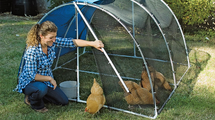 Greenhouse Chicken Coop Home Interior Design Trends