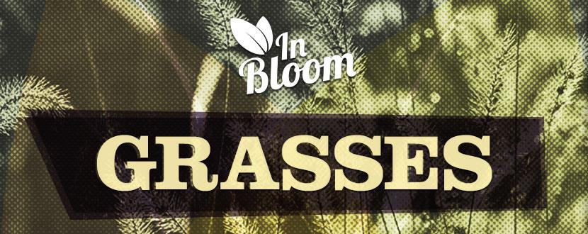 In Bloom Grasses