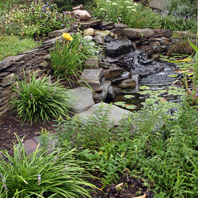 Grasses look great along backyard ponds