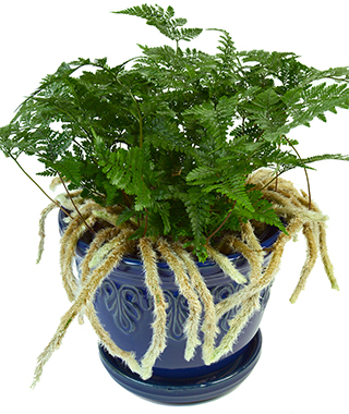 Top 5 Easy-Care/Hard-to-Kill Plants