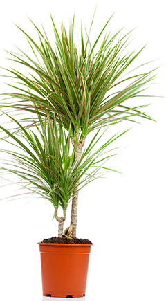 Top 5 Air Purifying Plants
