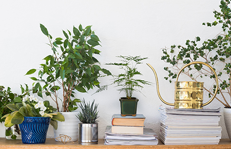 Image result for Classic Indoor Plants
