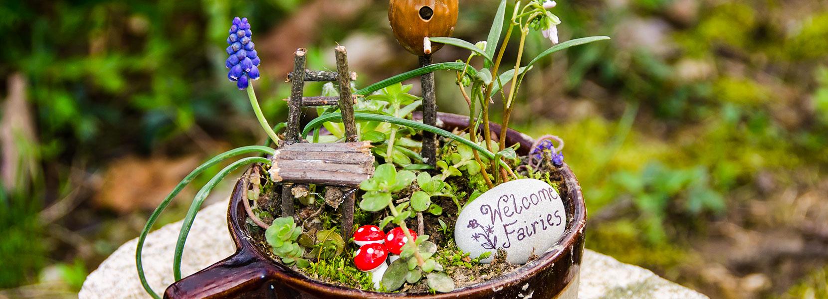 Fairy Garden Tips