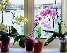 Top Five Difficult-but-worth-it Houseplants
