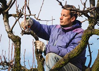 Man planting new shrubs