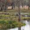 Metcalfe's Pond