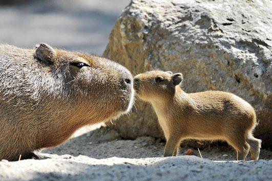 Capybara & Selenium
